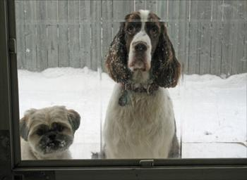 Dogs on the outside looking in.